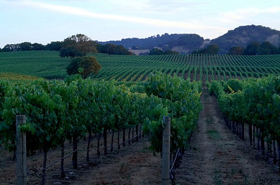 Summer Solstice in Sonoma County Healdsburg, California