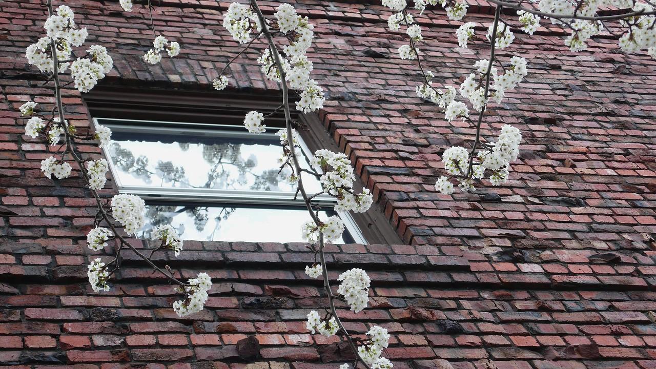 Blossoms and Bricks Santa Rosa, California