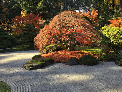 Color Display in the Portland Japanese Garden