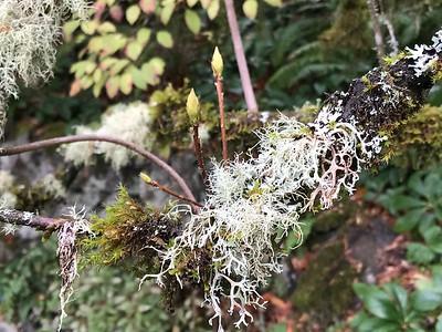 Textures in the Garden