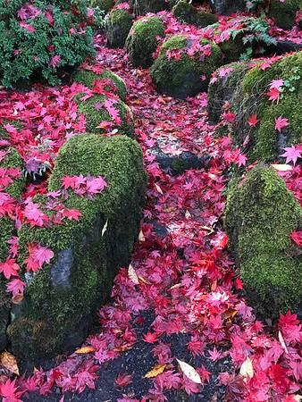 Vivid Autumn Display