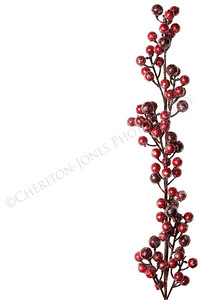 Sparkly Red and Silver Berries on Branch Isolated Background