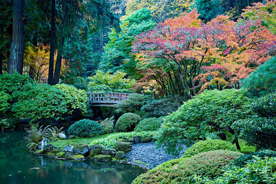 """Glorious""  The Portland Japanese Garden at the peak of color in fall. It's an incredibly designed and maintained garden. I watched some of the gardeners on ladders, taking direction from a Japanese man on the ground, as he told them which branches to prune. Fascinating! Taken in Portland, Oregon, USA."