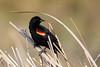 """A Curve for the Blackbird"""