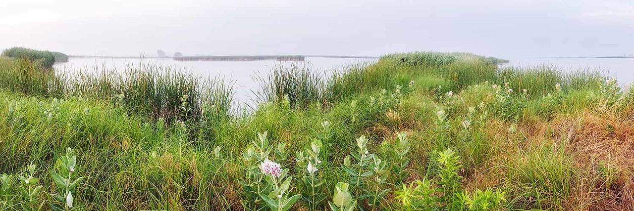Milkweed, Quivira National Wildlife Refuge