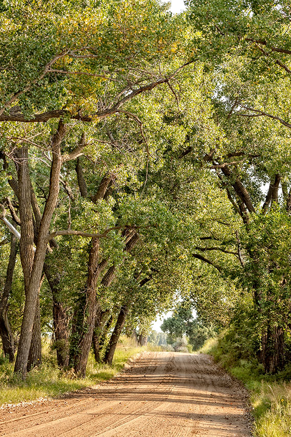 Stafford County Cottonwoods