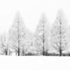 Trees in Snow - Pennsylvania