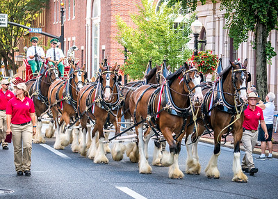 Clydesdales visit Lancaster City