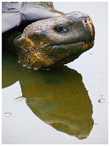 Galapagos 14