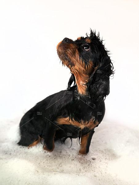 Marmaduke bath profile