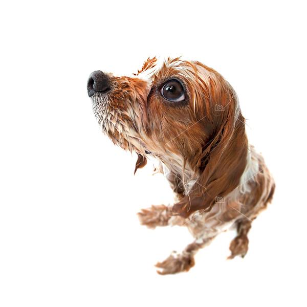 Fisheye wet Archie