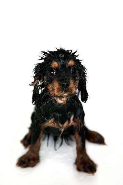 Puppy bathtime
