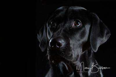 Portrait of Sarge