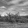 Apple Orchard - Winchester, Virginia
