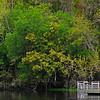 Spring at De Leon Springs State Park, Florida