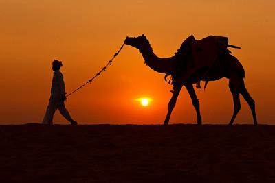 Camel Herder Going Home