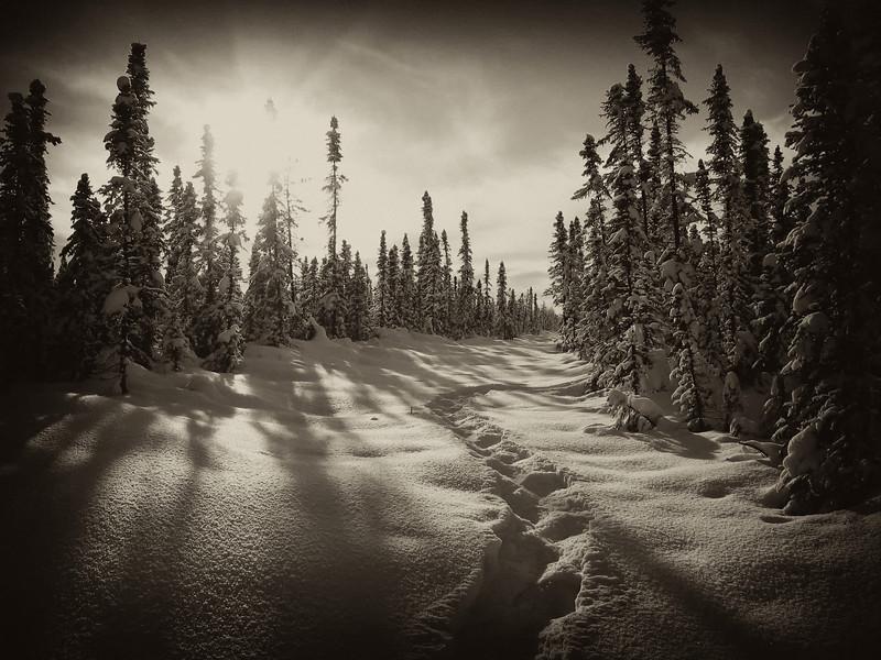 Winter cutline, northern British Columbia, Canada