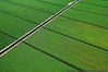 Planted crops in southern Florida<br /> Recommended Sizes: Rectangular formats up to 20x30 & Photo Puzzles