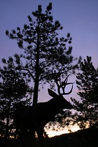 Boulder, Colorado, buck.