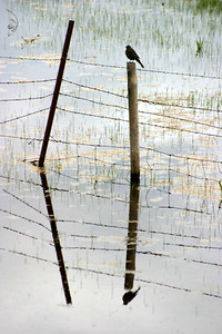 Camas Prairie reflection II.