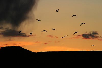 Birds at sunset, Snake River Plain, Idaho.