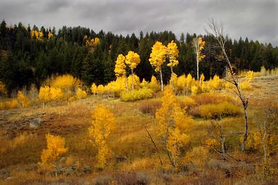 Autumn in the Boulder Mountains, Idaho.
