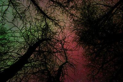 Northern lights among the cottonwood trees, Trail Creek, Idaho.