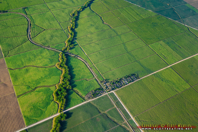 """Sugar crops in the Dominican Republic<br> <a href=""""http://www.gettyimages.com/detail/photo/sugar-crops-and-fields-royalty-free-image/149475659"""">Available for licensed use</a>"""