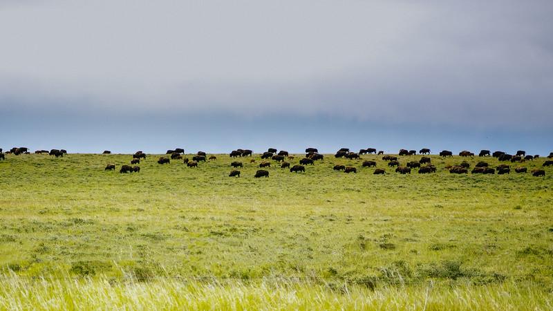 Blackfeet