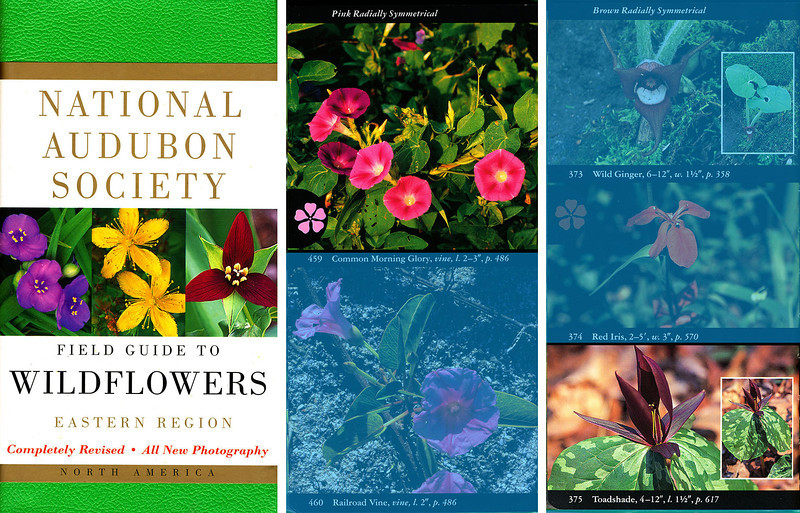 National Audubon Society, Field Guide to the Wildflowers - 2001, Common Morning Glory/Sessile Trillium