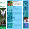 National Audubon Society, Field Guide to the Southeastern States - 2007, Common Morning Glory/Marsh Bulrush