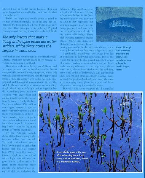 Natural History Magazine - 2002, Marsh Plants