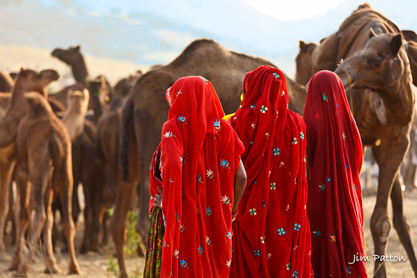 Women at Camel Fair