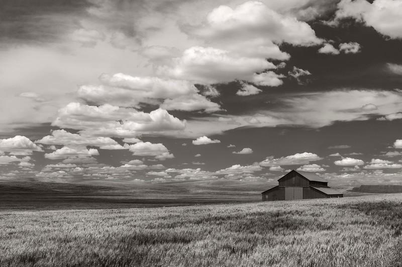Barn in a wheat field, Eastern Washington