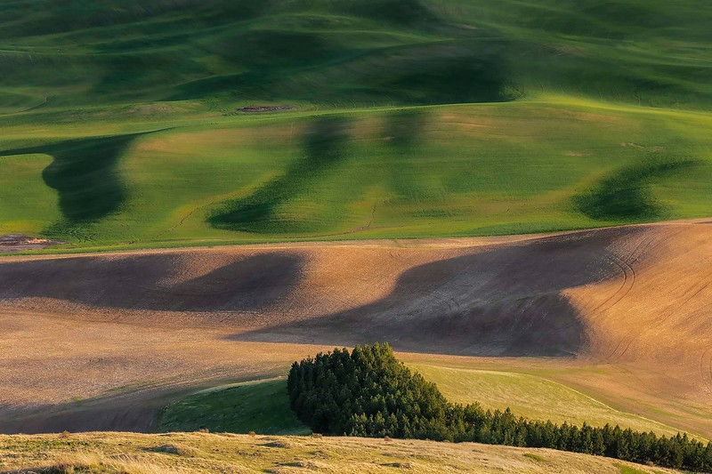 Sleeping musical note, from Steptoe Butte, Washington