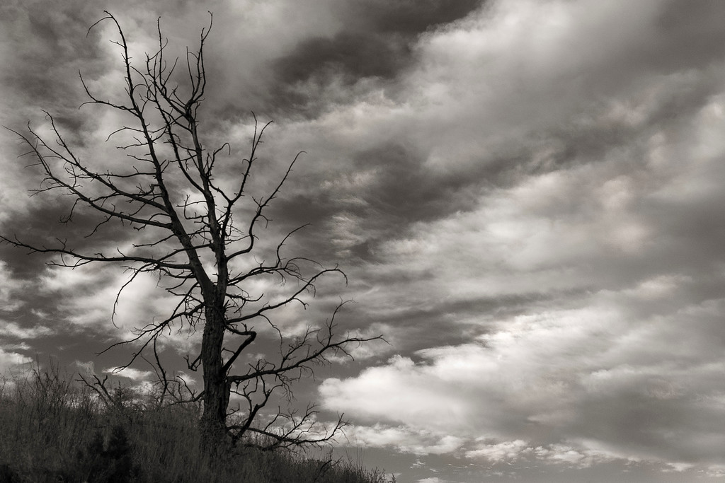 Tree and clouds at Sunrise (black & white), Painted Hills Unit, John Day National Monument, Oregon
