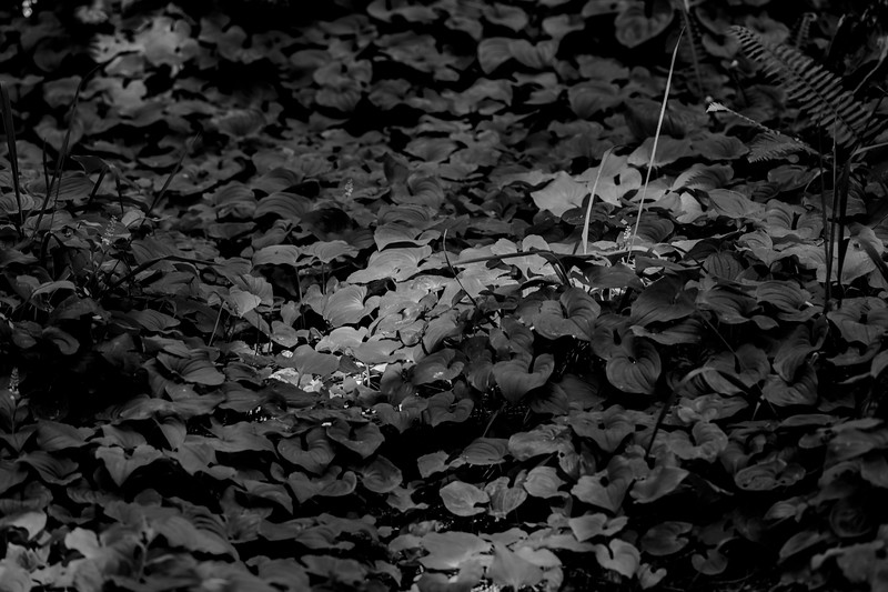 Forest floor detail, Ecola State Park, Oregon