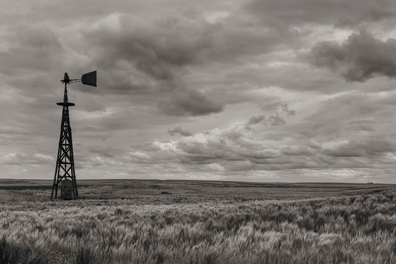 Old windmill and wheat field, Eastern Washington