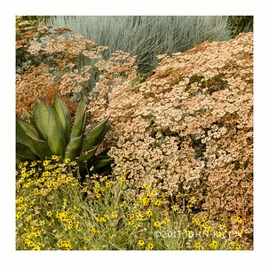 Agave & Friends 2