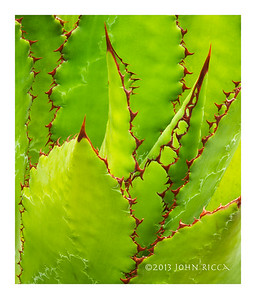 Succulent Abstract 5