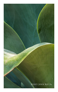 Succulent Abstract 1