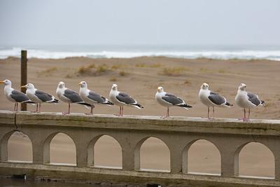 Sea Gulls at Seaside