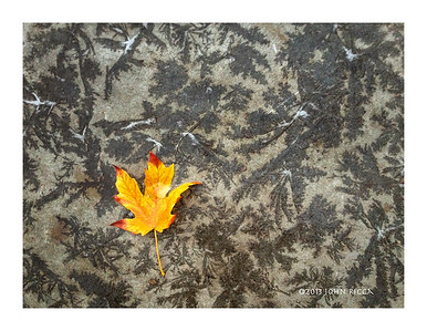 Leaf On Sidewalk