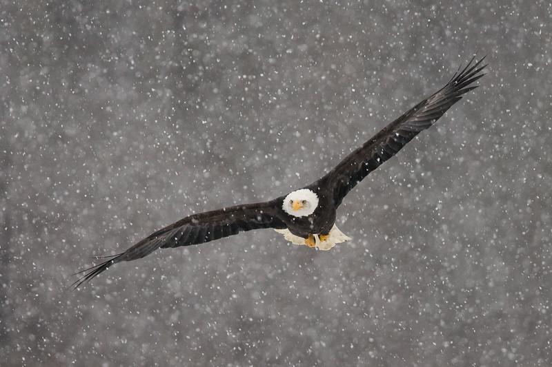 Soaring Through Snow