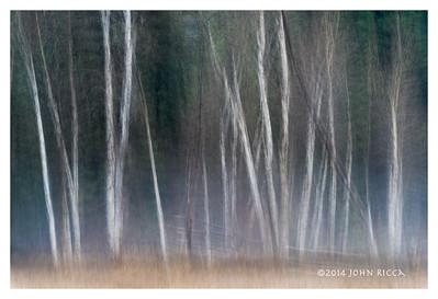 Yosemite Impression 16
