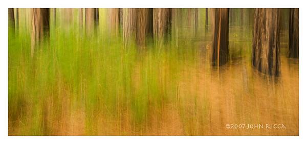 Yosemite Woods Shake 1
