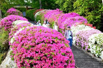 花満開の参道