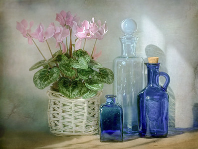 Still life with Cyclamen