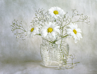 Still life with white chrysanthemum