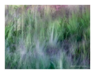 Window & Grasses